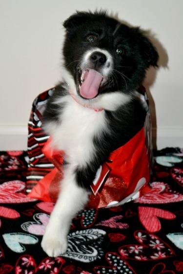 happy-pup-in-bag